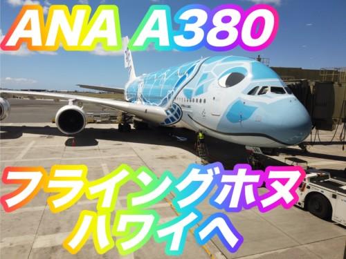 【体験談】ANA A380 フライングホヌ(空飛ぶウミガメ)マイルでハワイへ
