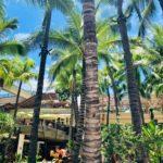【ハワイ】アイランドヴィンテージコーヒーのアサイーボウルはテイクアウトがおすすめ!