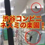 【動画あり】渋谷のファミマはネズミの楽園!動画拡散された店舗はどこ?