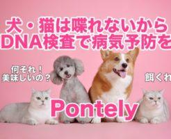 Pontely,pontely,犬,猫,遺伝子検査,DNA