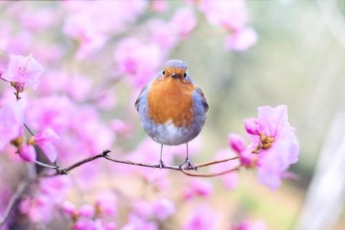 【プチプラ】春コスメ2020アイシャドウの紹介