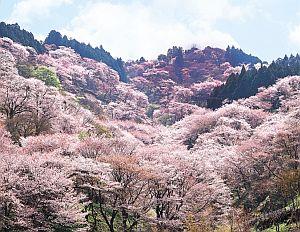 【2020年】吉野山のお花見|桜開花予想・穴場・混雑・アクセス