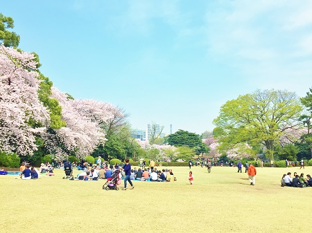 芝生広場(千駄ヶ谷門の近く)