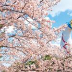 【2020年】万博記念公園のお花見|桜開花予想・穴場・混雑・アクセス