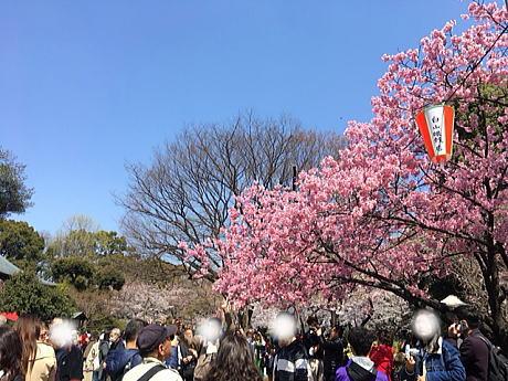 上野恩腸公園のお花見の穴場