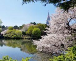 新宿御苑のお花見|桜開花予想・穴場・混雑状況・アクセス・レストラン&カフェ