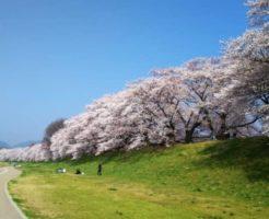 【2020年】淀川河川公園のお花見|桜開花予想・穴場・混雑・アクセス