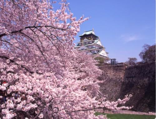 【2020年】大阪城公園の桜開花予想・穴場・混雑・アクセス