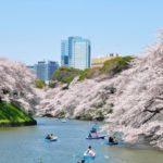 2020千鳥ヶ淵緑道のお花見桜開花予想・穴場・混雑・アクセス・レストラン&カフェ