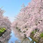 【2020年】岡崎公園のお花見|桜まつり開花予想・穴場・混雑・アクセス