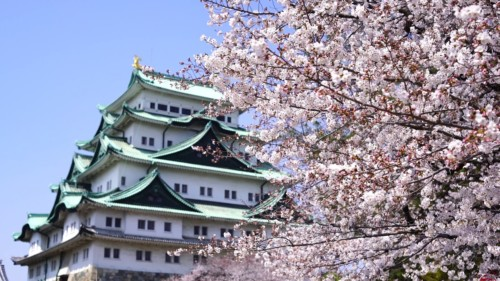【2020年】名古屋城のお花見|桜開花予想・穴場・混雑・アクセス