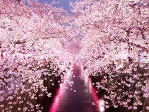 【2020】目黒川桜祭りの開花予想・穴場・混雑状況・アクセス・座って桜見物できるレストラン・カフェ
