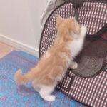 【テラハ】木村花さんの愛猫からあげくんはスターダムに保護され無事を報告